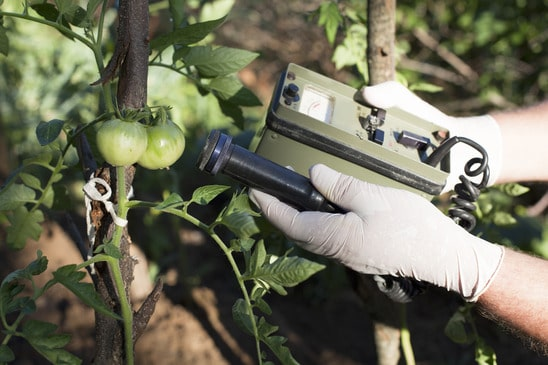Specialist checking the food safety of the fruit